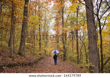 Walk in the Forest on Rainy Autumn Day