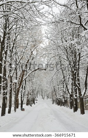 Walk in the park with snow-covered trees, overcast winter day