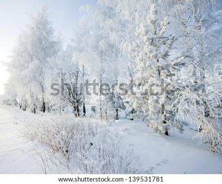 Walk through the beautiful winter scene in Russia - stock photo