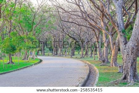 walk way and nice trees in the park - stock photo