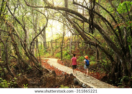 Walk way in Rainforest of Tarutao National Marine Park, Islands located in the Andaman Sea, off the coast of Satun Province of Southern Thailand. - stock photo