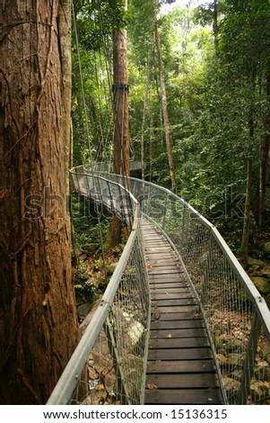 walking bridge in the jungle