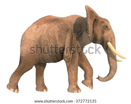 Walking elephant with a lowered trunk on a white background