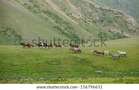 Walking herd of horses, vivid green grass - stock photo