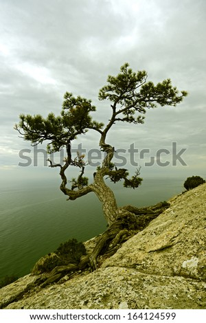 Walking in the autumn Crimea - stock photo