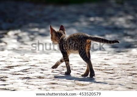 Walking kitten on the street - stock photo