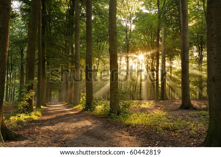Walking path in forest at morning with beautiful sunbeams. - stock photo