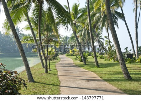 Walking path surrounded by coconut trees in Kerala, India. - stock photo