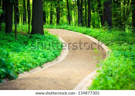 Walking paths through the woods, bright green. The photo on the shallow depth of field. - stock photo