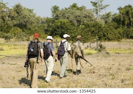 Walking safari in South Luangwa National Park, Zambia - stock photo