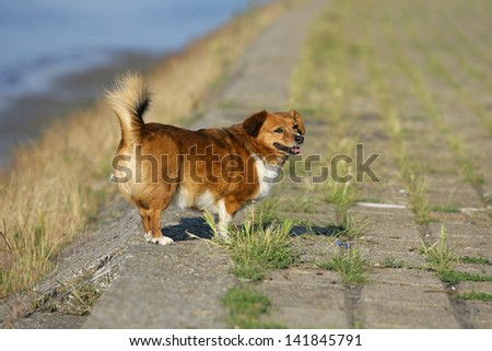 walking the dog on a beautiful sunny day - stock photo