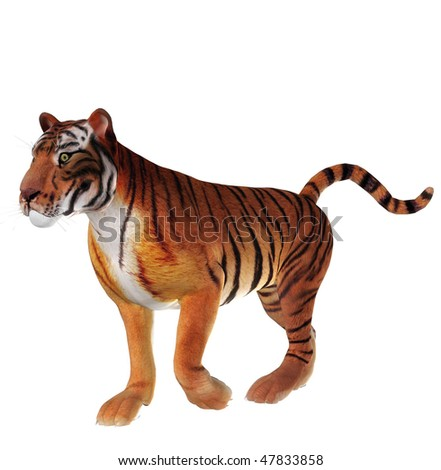 Walking tiger illustration - stock photo