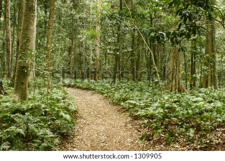 Walking track in forest - stock photo