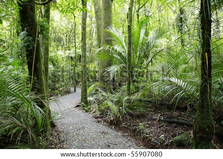 Walking trail in lush green tropical forest - stock photo