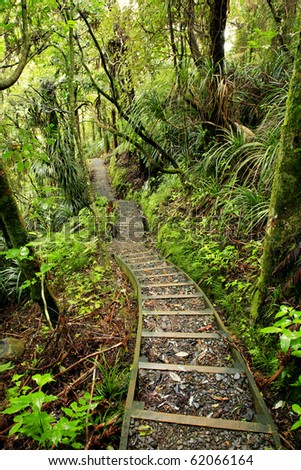 Walking trail in New Zealand tropical forest - stock photo