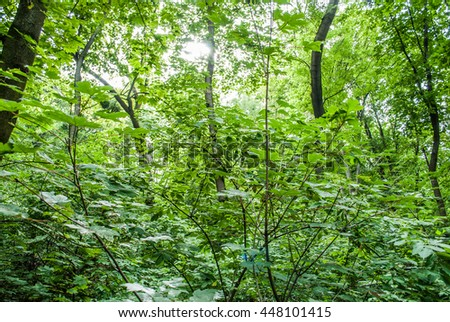Walking trail in New Zealand tropical forest Green tangle Summer card with a view on scenic forest landskape and a bush natural full frame background showing lots of twigs. - stock photo