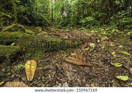 Walking trail within a cloud forest in Costa Rica. - stock photo