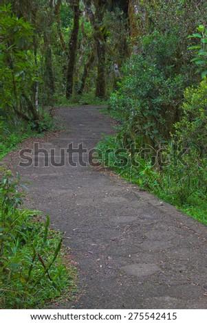 Walkint into the forest - Contructed path - Cambara - Rio Grande do Sul - Brazil - stock photo