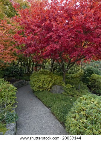 Walkway amidst colorful display of bright autumn plants