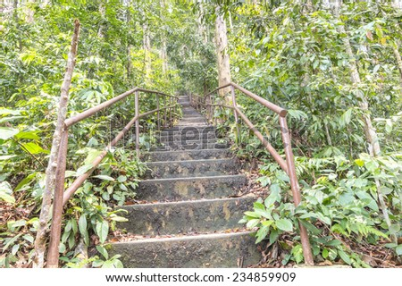 Walkway at tropical rainforest - stock photo