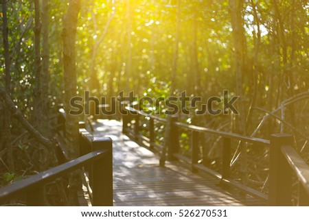 Walkway bridge in mangrove Pranburi, Prachuap Khiri Khan province, Thailand
