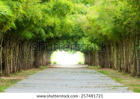 Walkway flanked on both sides with a bamboo forest. - stock photo