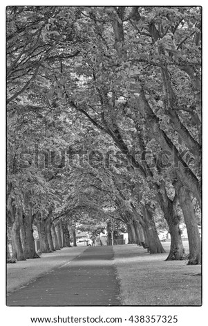 walkway footpath in the parc with trees and field flowers. Black and white photo with vintage border - stock photo