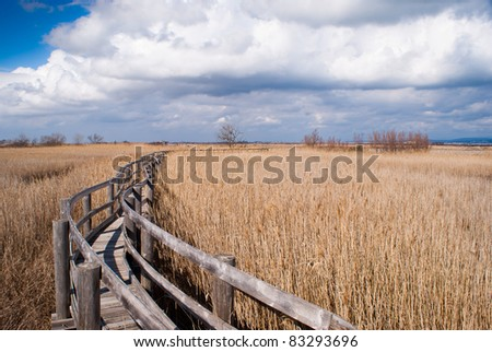Walkway in a cane thicket - stock photo