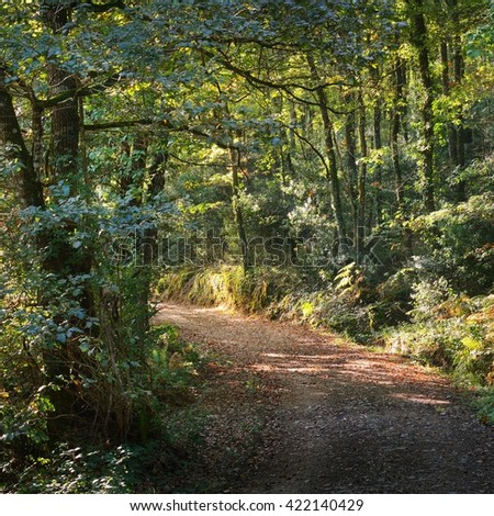 Walkway in a green deciduous forest on a foggy sunny morning - stock photo