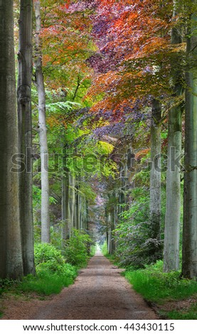 Walkway in a green Spring beech forest in Leuven, Belgium - stock photo