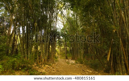 Walkway in bamboo rain forest