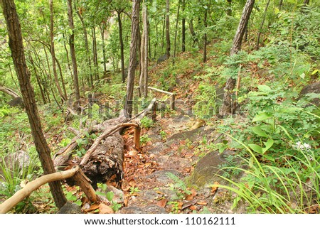 walkway in jungle - stock photo
