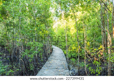 Walkway in Mangrove forest, Thailand