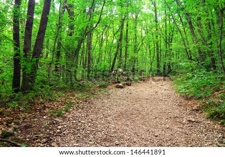 Walkway in the forest. Beautiful landscape - stock photo