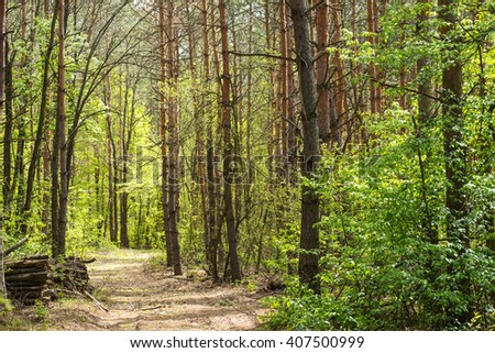 Walkway in the forest. Beautiful landscape