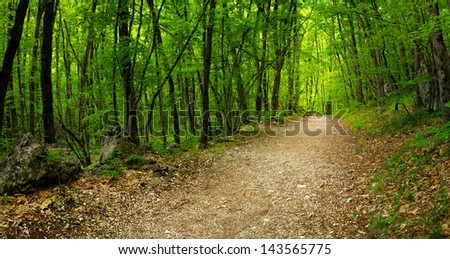 Walkway in the summer forest. Beautiful landscape - stock photo