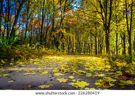 Walkway in the wonderful autumn wood. - stock photo