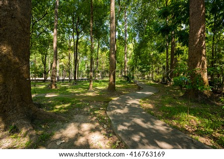 Walkway Lane Path With Green Trees in park. - stock photo