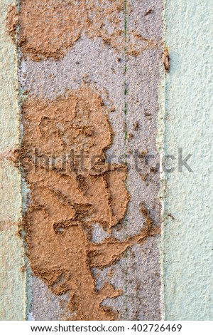 Walkway of Termite, Termite nest on Cement of house - stock photo