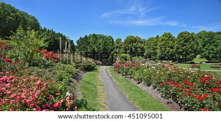 walkway through blooming rose garden at munich west park, germany - stock photo