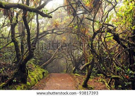 Walkway through Cloud Forest, Poàs Volcano National Park, Costa Rica - stock photo