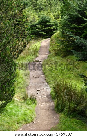 Walkway through forest in scotland - stock photo