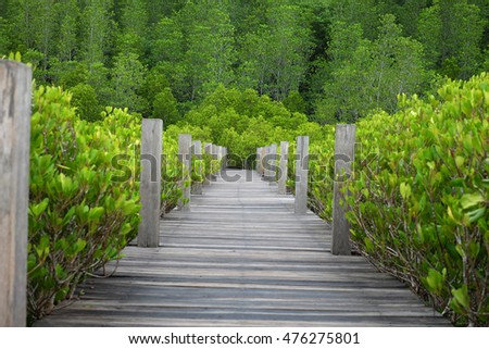 walkway with wooden bridge through mangrove forrest,Golden meadow prong or thung prong thong (thai language)at Rayong,Thailand