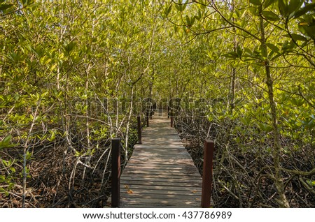 Walkway with wooden bridge through mangrove forrest, Golden Meadow Prong (Thai language) at Ra-yong, Thailand
