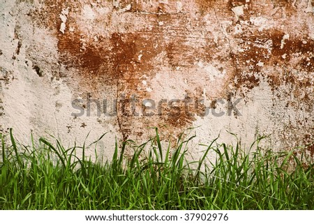 Wall and Grass
