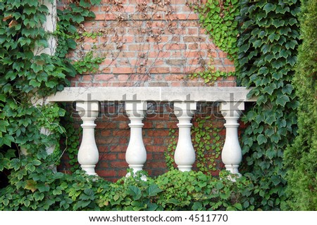 wall and ivy in garden
