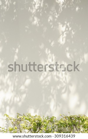 wall background with tree shadow and bush - stock photo