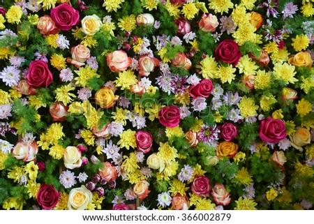 Wall decorated by a variety of bright flowers                                - stock photo