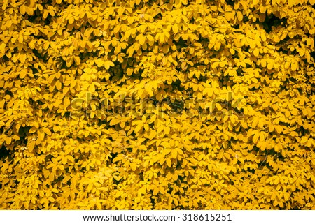 Wall leaves, petal image. Empty, simply dark yellow. orange gradient background. Summer, autumn time. Flora Park.