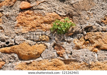 Wall made of stones and mortar with green plant - stock photo